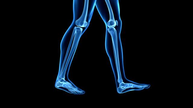 human skeleton, walking - human skeleton stock videos & royalty-free footage