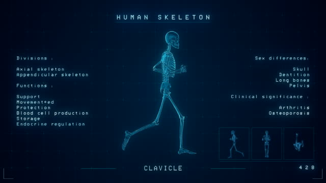 human skeleton xray animation | loopable - animazione biomedica video stock e b–roll