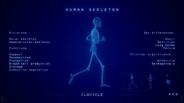 human skeleton xray animation | loopable - human spine stock videos & royalty-free footage