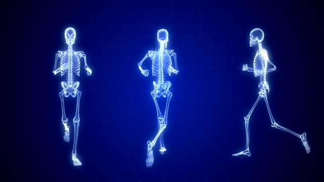 human skeleton x-ray animation | loopable - human bone stock videos & royalty-free footage