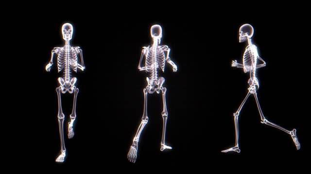 Human Skeleton X-ray Animation | Loopable