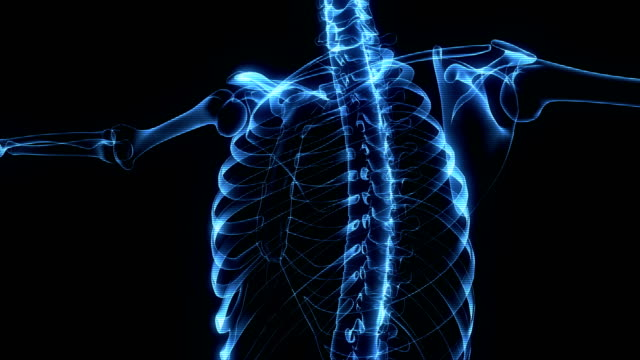 menschliches skelett röntgen-animation - menschliches skelett stock-videos und b-roll-filmmaterial
