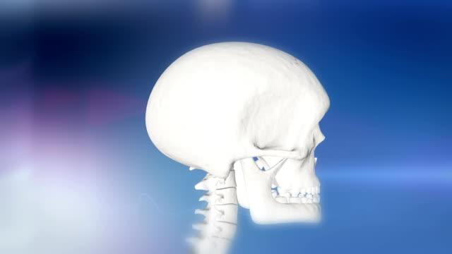 hd: human skull indicating a headache - biomedical illustration stock videos & royalty-free footage
