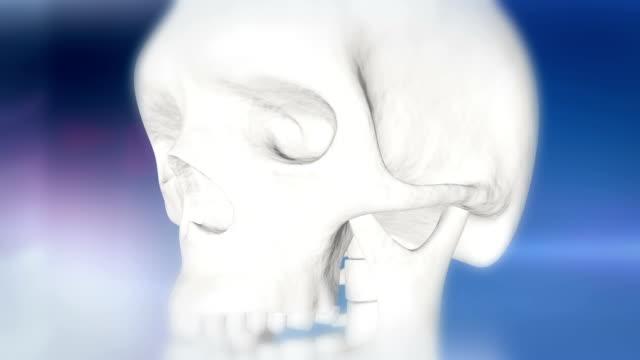 hd: human skull indicating otitis - human ear stock videos & royalty-free footage