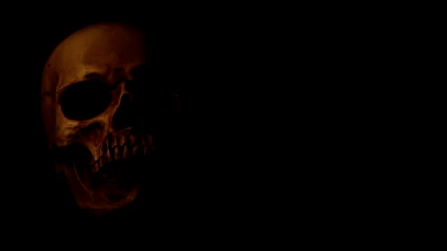 human skull on solid dark background in candlelight - skull stock videos & royalty-free footage