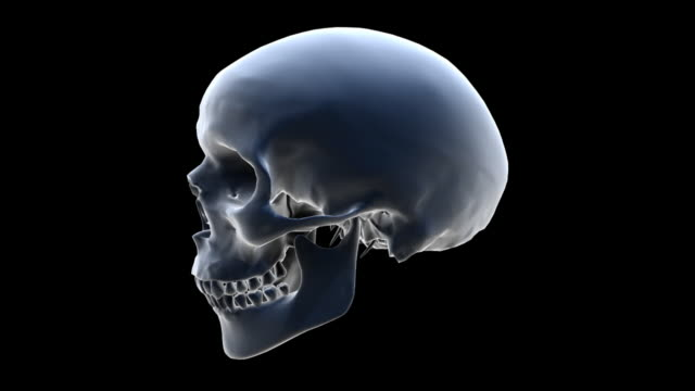 cgi, human skull rotating against black background - biomedical illustration stock videos & royalty-free footage