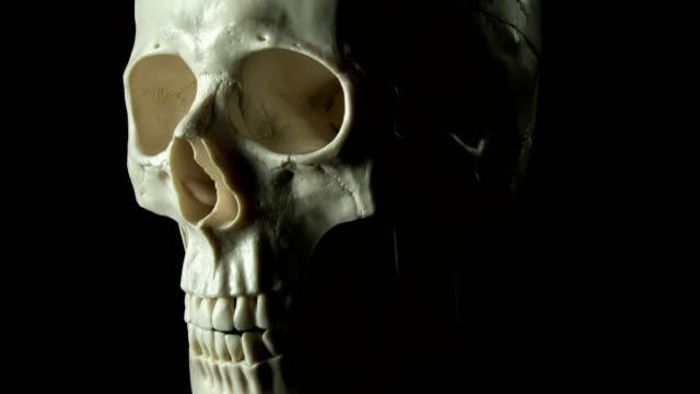 vidéos et rushes de filature de crâne humain - touche de couleur