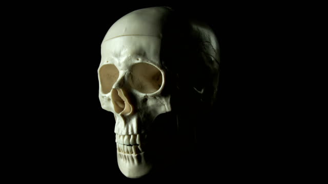 human skull spinning - skull stock videos and b-roll footage
