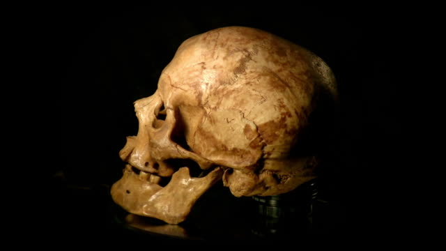 人の頭蓋骨 - 鼻腔点の映像素材/bロール