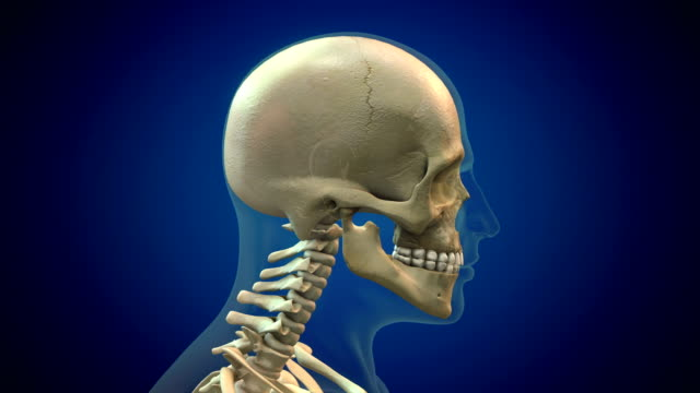 human skull - spine stock videos & royalty-free footage