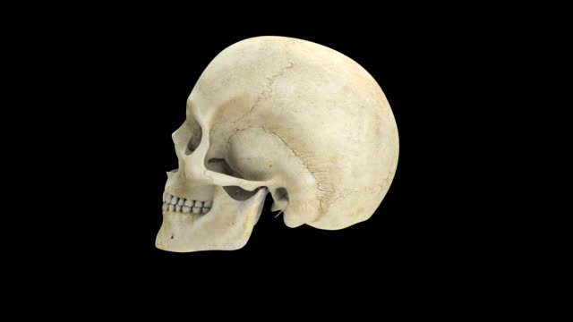 human skull - human head stock videos & royalty-free footage