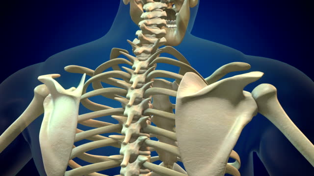 human spine - thoracic vertebrae stock videos & royalty-free footage