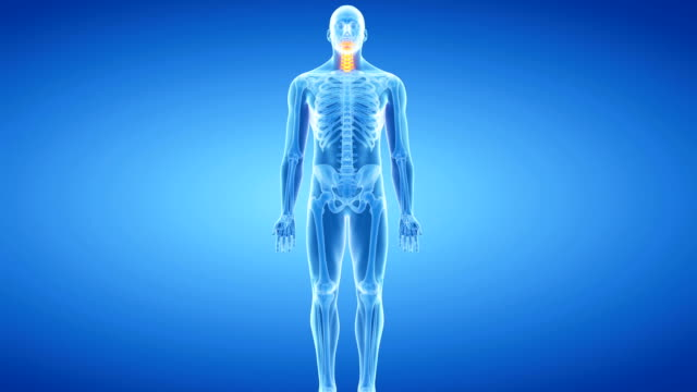 human spine - cervical vertebrae stock videos & royalty-free footage