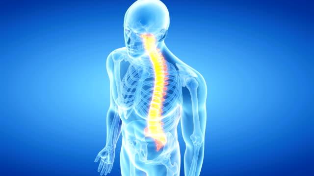 human spine - human vertebra stock videos and b-roll footage
