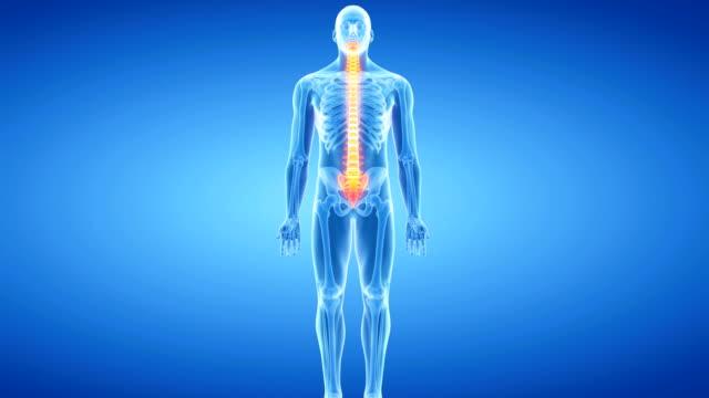 human vertebrae - människoryggrad bildbanksvideor och videomaterial från bakom kulisserna