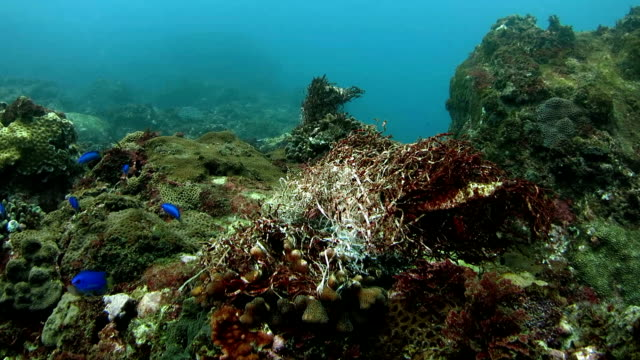 Human-created garbage covered on the coral