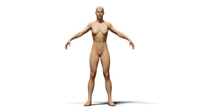 4k humen transgender process animation.isolated with luma matte - luma matte stock videos & royalty-free footage