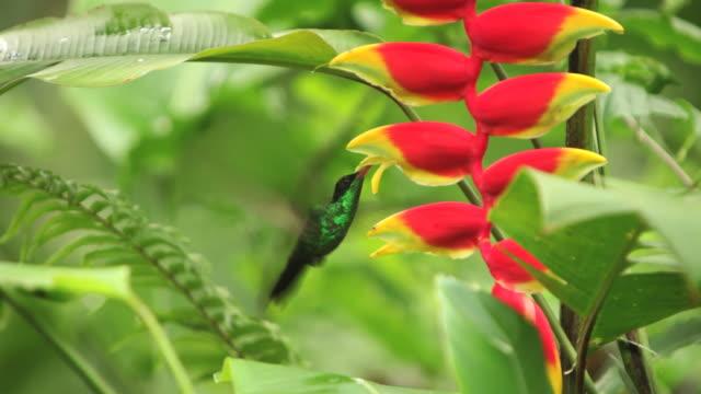 vídeos de stock e filmes b-roll de cantarolando o pássaro hd - bico