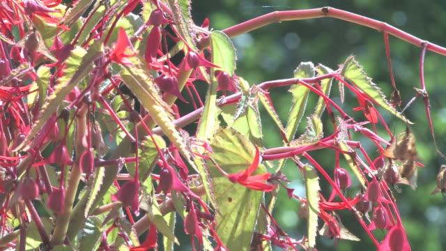 colibri 1 - hd 30f - hummingbird stock videos and b-roll footage