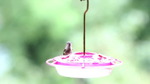 hummingbird and bee - hummingbird stock videos and b-roll footage