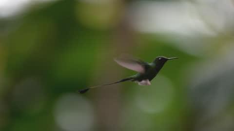 hummingbird / ecuador - tights stock videos & royalty-free footage