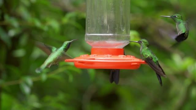 hummingbird  feeding on a bird feeder, slow motion - hummingbird stock videos and b-roll footage