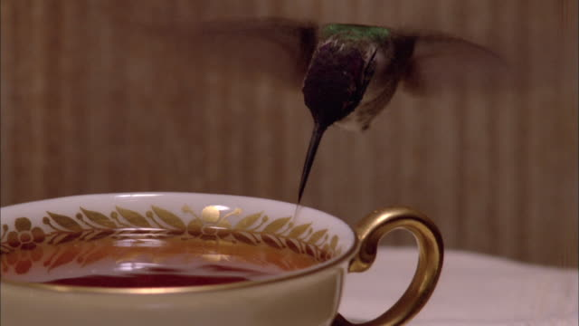 vídeos de stock e filmes b-roll de hummingbird hovers above coffee cup and drinks available in hd. - bico