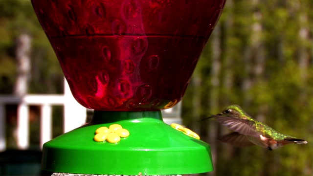 hummingbird madness. - ruby throated hummingbird stock videos and b-roll footage