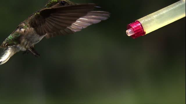 a hummingbird slowly makes its way to a bird feeder. - gliedmaßen körperteile stock-videos und b-roll-filmmaterial