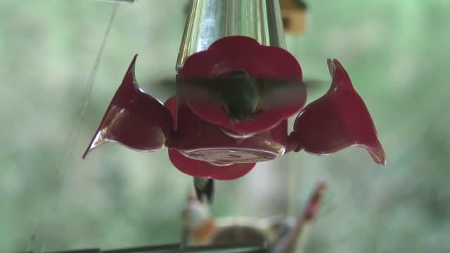 vídeos y material grabado en eventos de stock de (hd1080i) hummingbirds todo alimentador - boca de animal