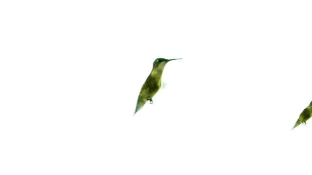 Hummingbirds Racing