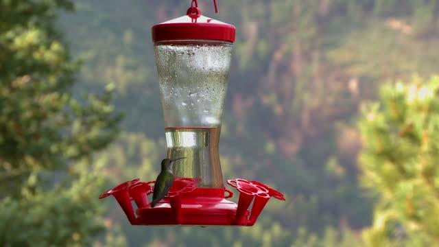 hummingbirds vs. bees - hummingbird stock videos and b-roll footage