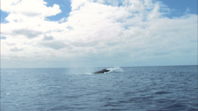 humpback whale breaching - antarctica whale stock videos & royalty-free footage