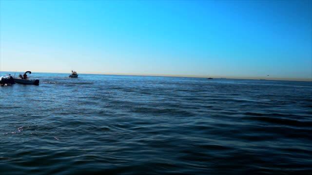 humpback whale close up feeding on menhaden in nyc - クジラ点の映像素材/bロール