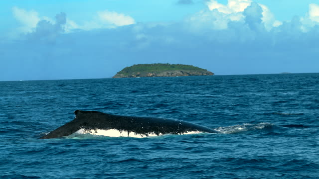 humpback whale spraying water out of its blowhole at the ocean near the equator - lobtailing stock videos & royalty-free footage