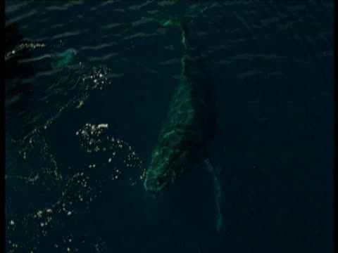stockvideo's en b-roll-footage met humpback whale surfaces, antarctica - spuitgat