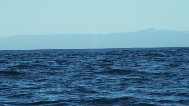 humpback whale tail fluke mammal swimming coastline california - blåshål djurkroppsdel bildbanksvideor och videomaterial från bakom kulisserna