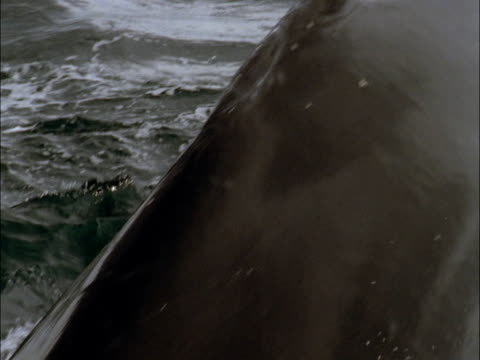 a humpback whale tail submerges during dive in antarctica. - tail fin stock videos and b-roll footage