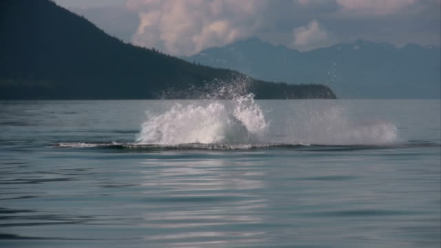 humpback whale - whale watching stock videos and b-roll footage