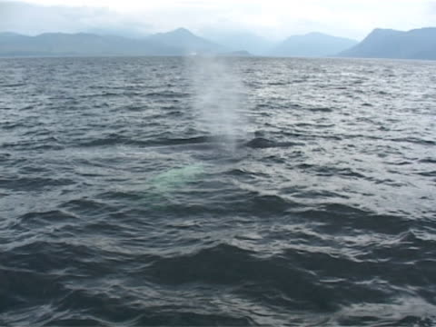 Humpback whale with Scottish islands behind