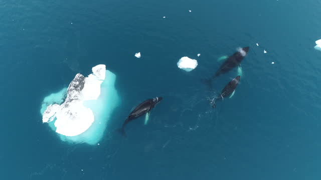 humpback whales antarctica - three animals stock videos & royalty-free footage