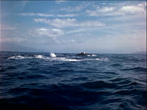 humpback whales breach the ocean's surface. - cetacea stock videos & royalty-free footage