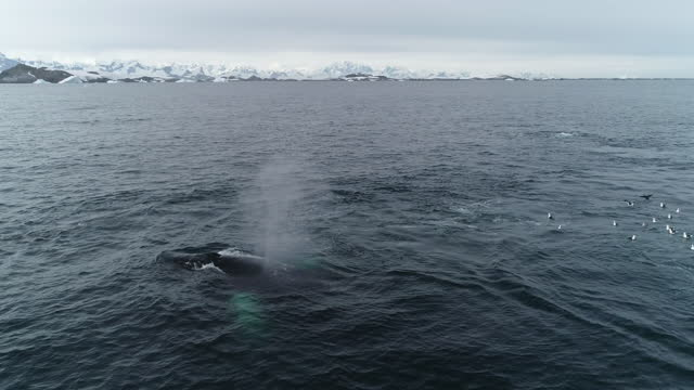 humpback whales feeding in antarctica - pod of whales stock videos & royalty-free footage