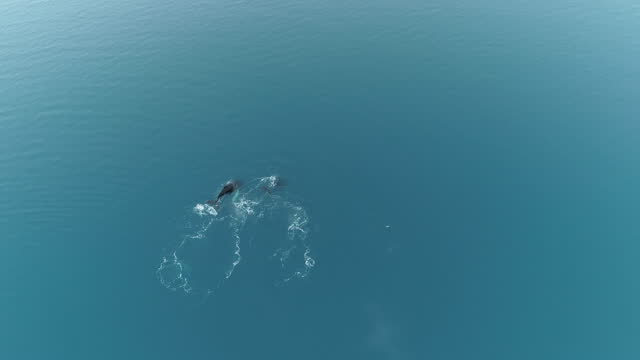 humpback whales in glacial waters, antarctica - cetacea stock videos & royalty-free footage