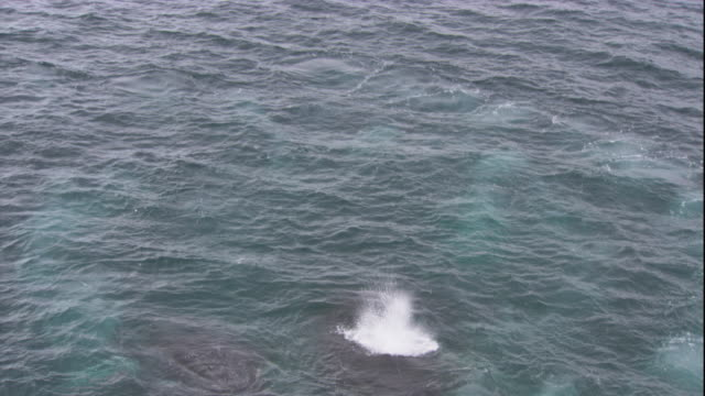 humpback whales surface in the southern ocean. available in hd. - cetacea stock videos & royalty-free footage