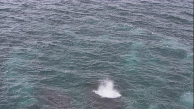 vidéos et rushes de humpback whales surface in the southern ocean. available in hd. - remonter à la surface