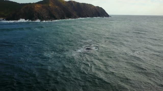 humpback whales swiming off the coast - sea life stock videos & royalty-free footage