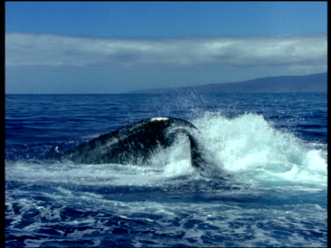 humpback whales tail slaps surface, splashes lots of water, alaska - lobtailing stock videos & royalty-free footage