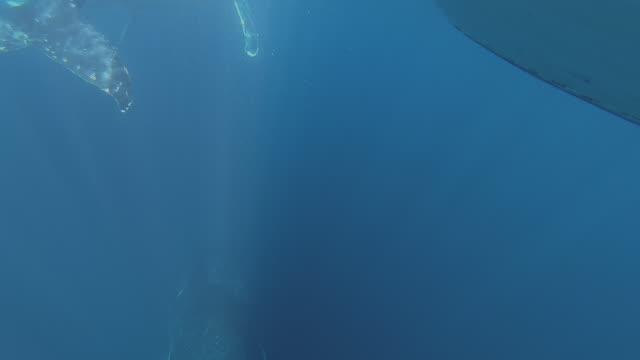 3 humpback whales underwater - underwater camera stock videos & royalty-free footage