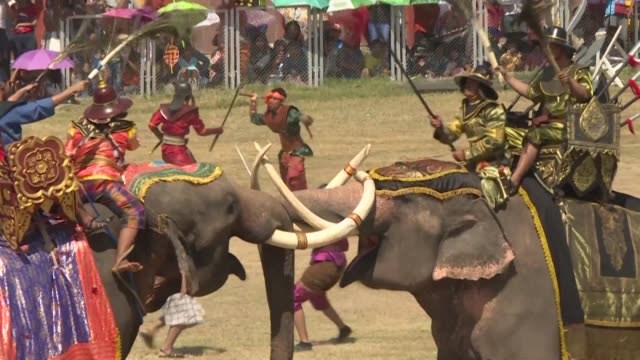 hundred elephants take part in the surin elephant round up where mahouts the elephant handlers show their skills in battle reenactments and playing... - battle stock videos & royalty-free footage